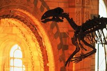 Natural History Museum, London - Museum in London.