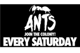 Ants at Ushuaa - Club Night | DJ Event | Party in Ibiza.