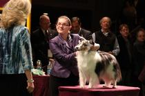 Westminster Kennel Club Dog Show - Special Event in New York.