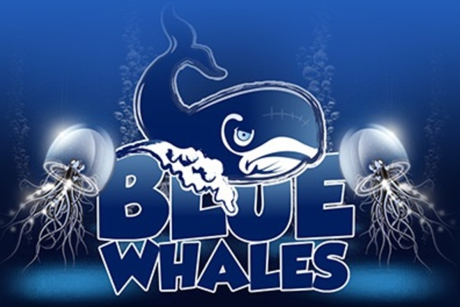 Photo of Blue Whales