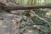 Rock-creek-park_s165x110
