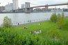 Brooklyn Bridge Park - Live Music Venue | Outdoor Activity | Park in New York.