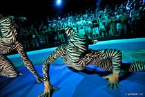The Zoo Project - Club   Outdoor Bar in Ibiza.