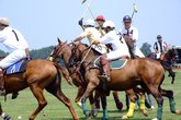Green Cup Polo - Polo | Benefit / Charity Event in Washington, DC.