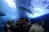 Aquarium-of-the-bay_s165x110