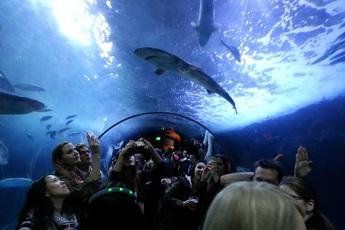 Aquarium of the Bay - Venue | Museum in San Francisco.