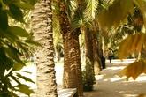 Parc-joan-miro_s165x110
