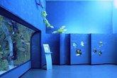 Museo-civico-di-zoologia_s165x110