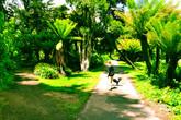 Golden-gate-park_s165x110