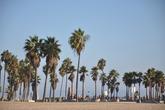 Venice-beach_s165x110