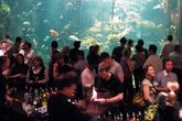 NightLife at the California Academy of Sciences - Culture | Drinking Activity | Event Space | Museum in SF