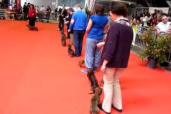 Exposition Canine Internationale - Show | Expo in French Riviera.
