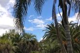 Lorto-botanico-botanical-gardens_s165x110