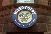 Wired Puppy - Coffeeshop | Café in Boston.
