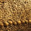 The Catacombs - Landmark in Paris.