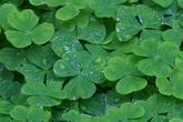 Irlanda-in-festa_s165x110