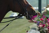 International Gold Cup - Horse Racing | Outdoor Event in Washington, DC.