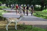 London Duathlon - Running | Cycling | Fitness & Health Event | Sports in London.