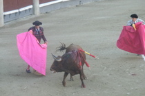 Bullfights-at-las-ventas_s210x140