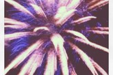 7th Annual Redondo Beach Fireworks - Holiday Event | Music Festival | Outdoor Event | Food & Drink Event in LA