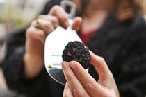 4th Annual Napa Truffle Festival - Food & Drink Event | Food Festival in San Francisco