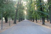 Parco delle Cascine - Park in Florence.