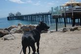 Malibu Lagoon State Beach (Surfrider Beach) - Beach | Outdoor Activity in LA