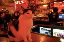 De Dampkring - Coffeeshop in Amsterdam.