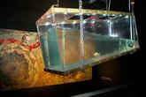 Le-poisson-rouge_s165x110