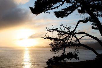 The Presidio - Beach | Culture | Outdoor Activity | Park in San Francisco.