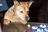 Washington-humane-society-bark-ball_s165x110