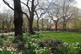 Tompkins Square Park - Park | Event Space in NYC