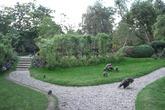Holland-park_s165x110