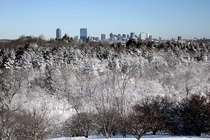 Arnold Arboretum - Park in Boston.